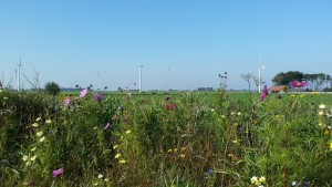 hgsr_1bloemenbiodiversiteit2015